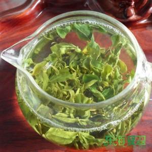 日照绿茶中档茶